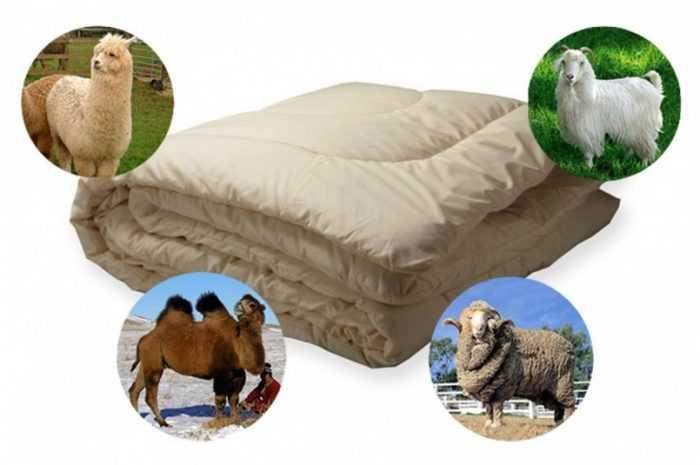 Одеяло из шерсти — ТОП-140 фото и видео вариантов шерстяных одеял. Отличительные черты шерсти как материала. Советы в выборе подходящего пододеяльника
